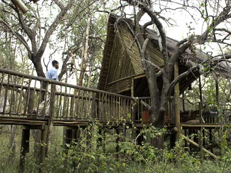 african-treehouse-lodge