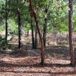 Hidden Trails of Cypress Creek