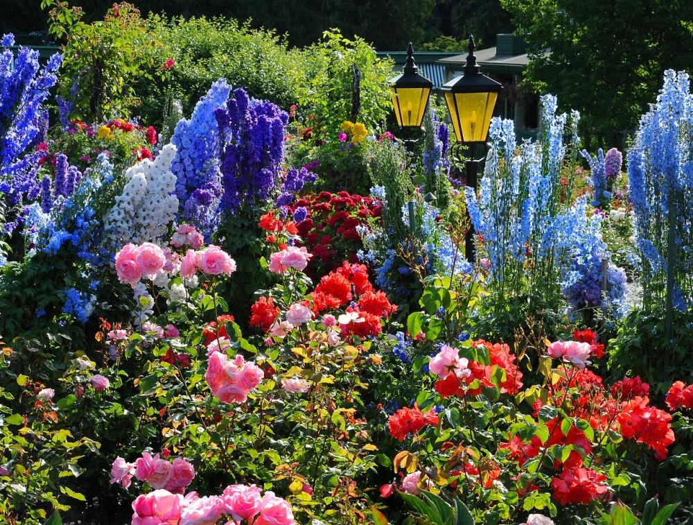 The Butchart Gardens  Victoria Canada  Rose Garden