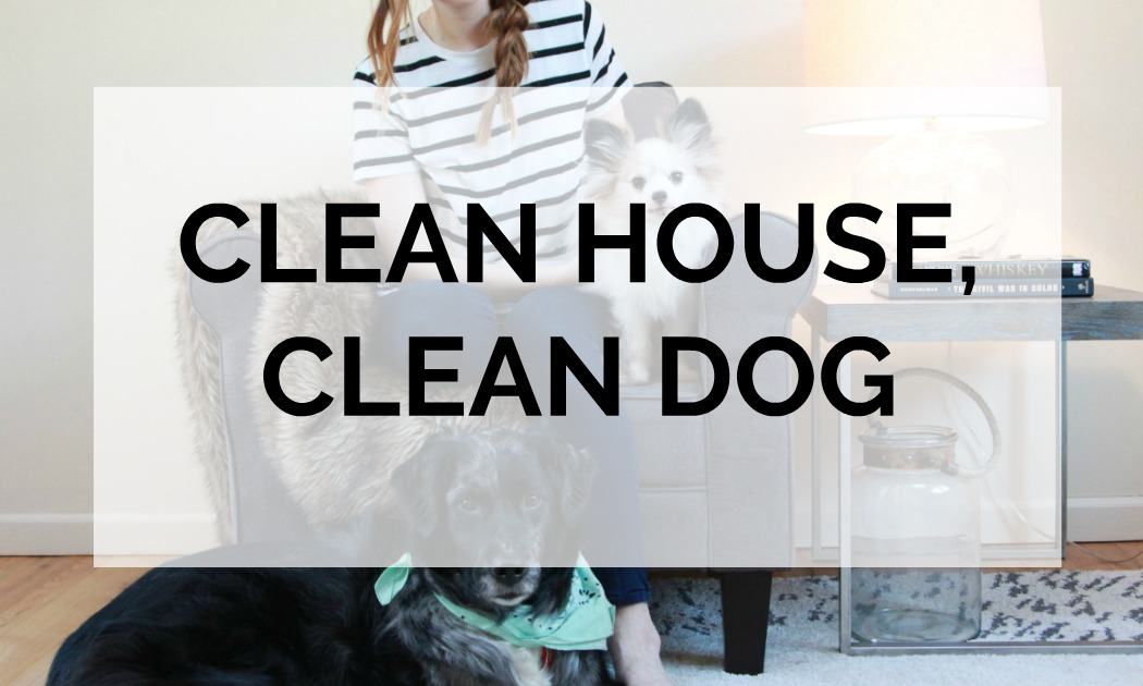 Dog Cleaning Hacks | Have a clean house with dogs