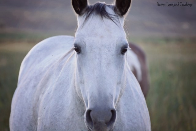 The Beauty of a Horse from butterloveandcowboys.com