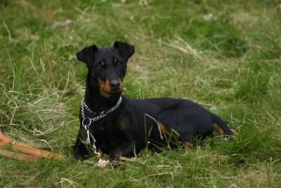 Hundelehrgang 2015 088