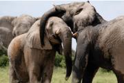 Kenya and Tanzania Safari Tours