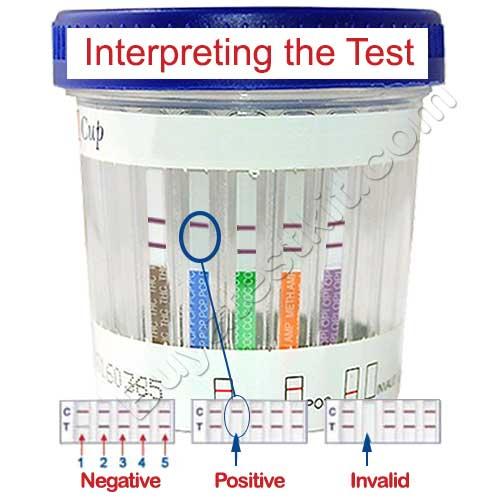 5 panel drug test eco2