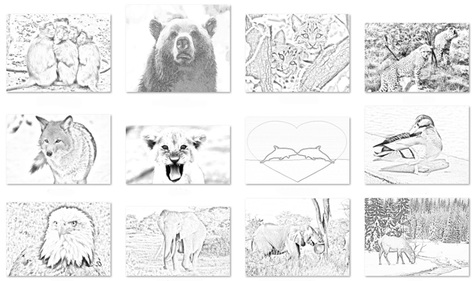The Wild Unrestricted PLR Coloring Book