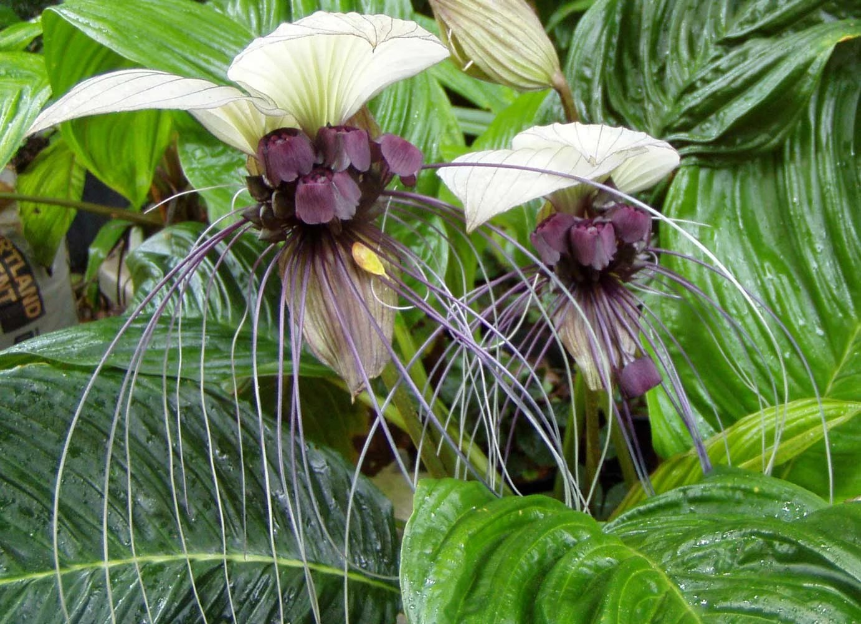 Exotic House Plants