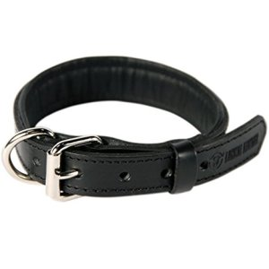 Top 10 Best Leather Dog Collars Review In 2021 – A Step By Step Guide 6