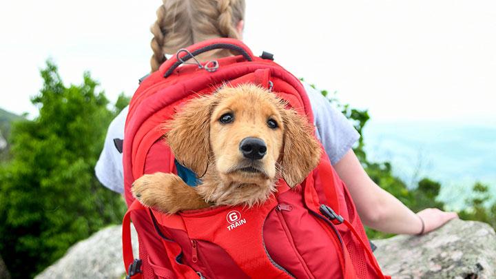 Top 10 Best Pet Carrier Backpacks Reviewed Sep 2019