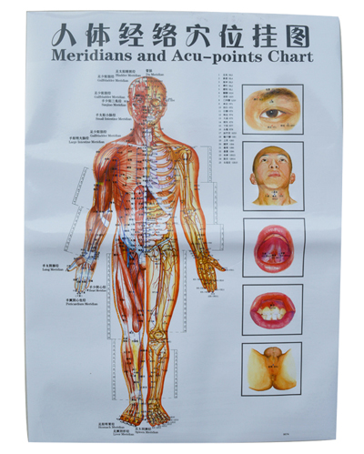 Acupuncture Points andAcupuncture Human Body Charts ...