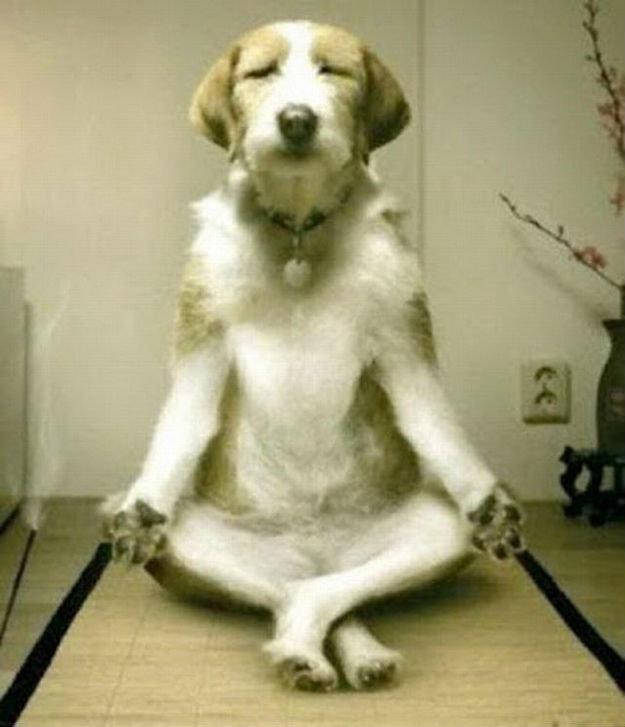 Toujours méditer