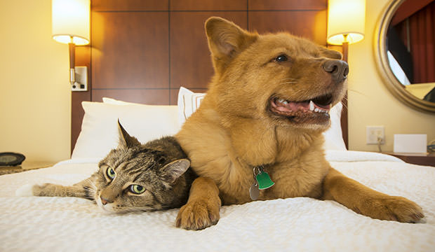 bigstock-Cat-And-Dog-Together-In-Hotel-94623140