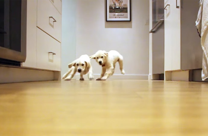 Watch These Puppies Grow Up in Less Than 2 Minutes