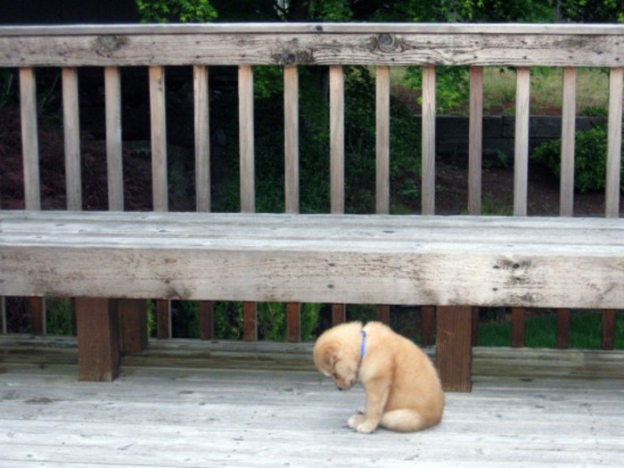 20 Sad Puppies That Will Ruin Your Day