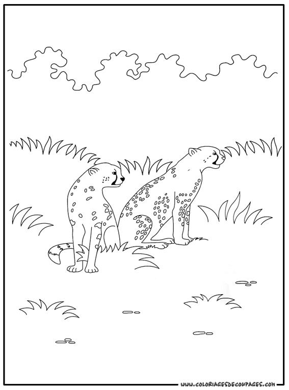 coloriage à dessiner guepard colorier