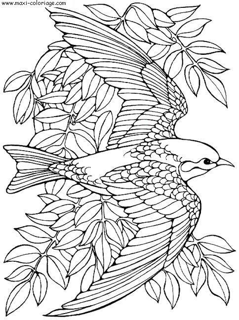 19 dessins de coloriage Oiseau à Imprimer à imprimer