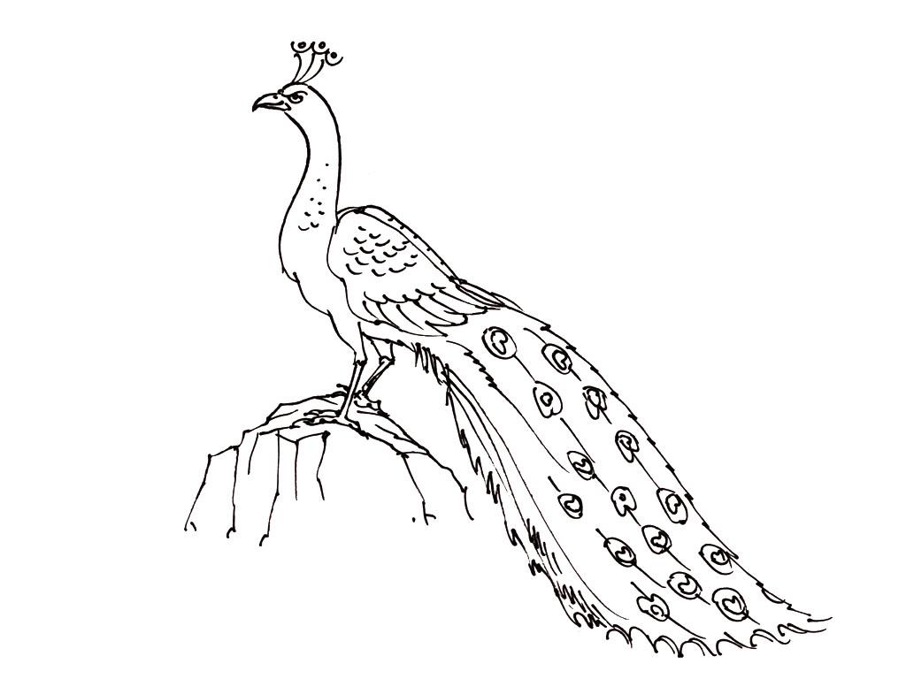 Dessin D Un Oiseau Dans Son Nid