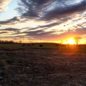 Sunset on a ranch in Kansas