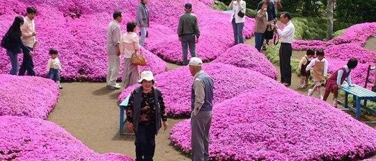 mr mrs kuroki flower garden