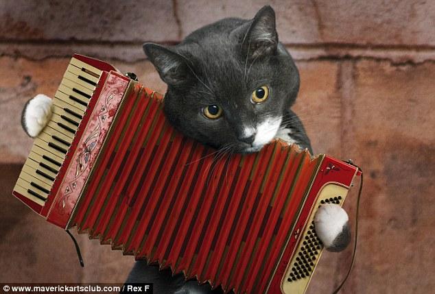 Cat Musical cats strike a chord in 2012 calendar 3