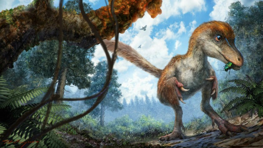 Beautiful Feathered Dinosaur's Tail Found Preserved 99-Million-Old Amber Fossil