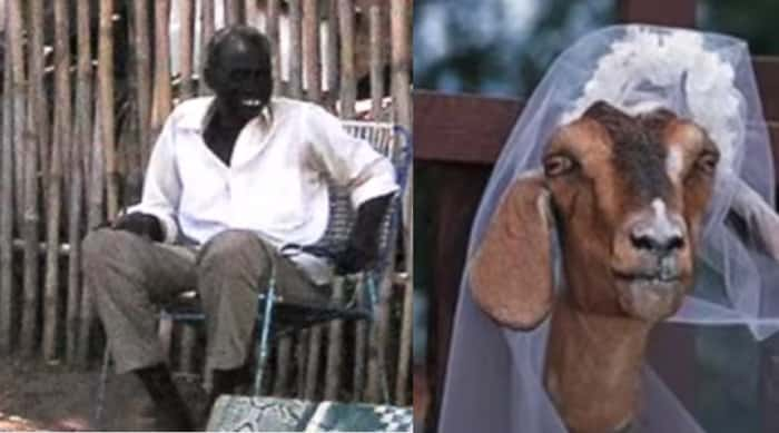 A man caught having sex with a goat was forced to marry her as a punishment of sudan