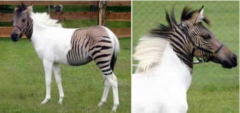 10 MOST AMAZING HYBRID ANIMAL