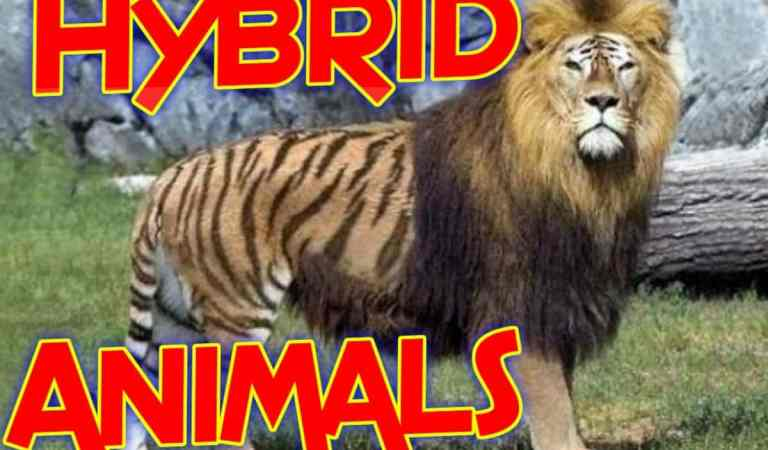 10 MOST AMAZING HYBRID ANIMALS