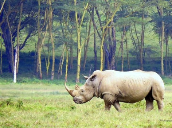 World Wildlife Day: Sustaining All Life on Earth in the 'Biodiversity Super Year'