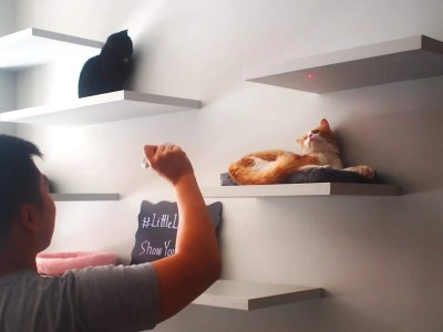 Check Out These 4 Amazing Cat Cafes in NYC