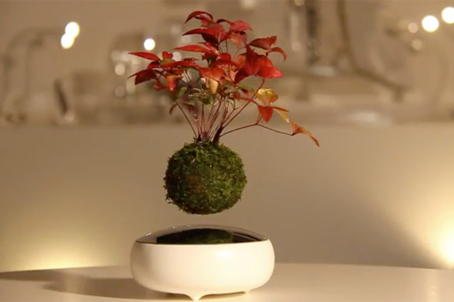 Air Bonsai – Schwebende Bonsais bei Kickstarter