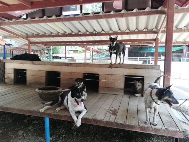 WVS Care for Dogs   Buzzy Bee Bike, Chiang Mai, Thailand