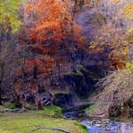 Fall trees near a pond
