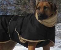 Photos: Whippet Coats, Greyhound Coats & more | Blue ...