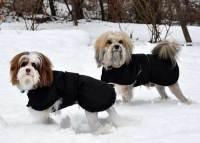 Photos: Whippet Coats, Greyhound Coats & more   Blue ...