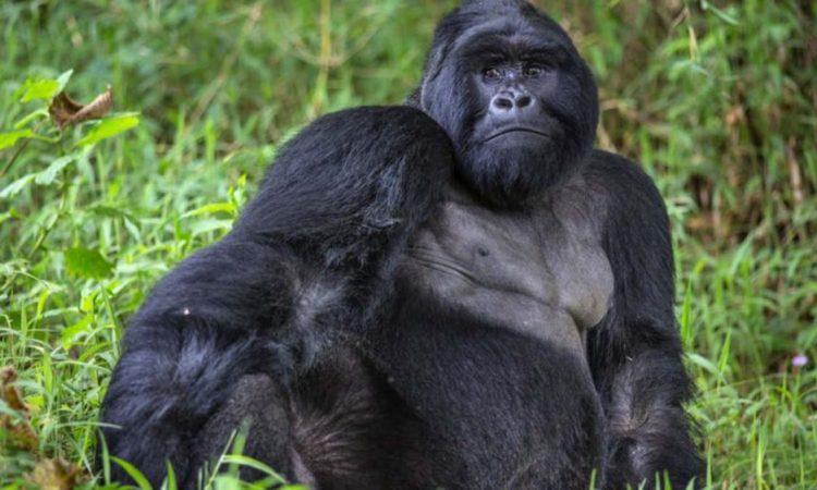 Mgahinga Gorilla National Park | Uganda Gorilla Trekking Destinations