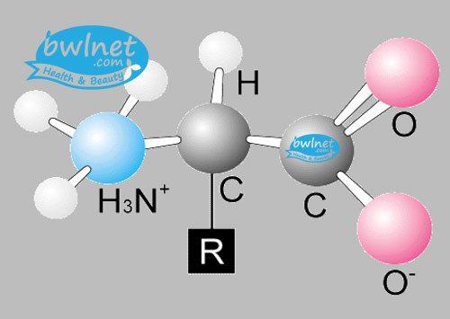 bwlnet-amino-acid-complex