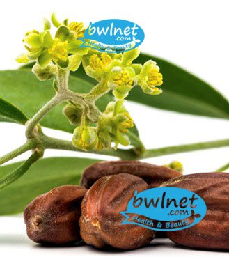 bwlnet-jojoba-seed-oil