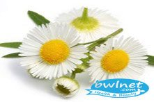 bwlnet-matricaria-flower-extract