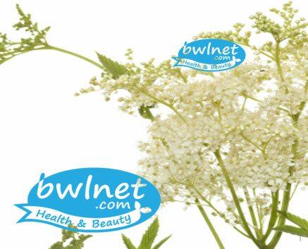 bwlnet-meadowsweet-extract