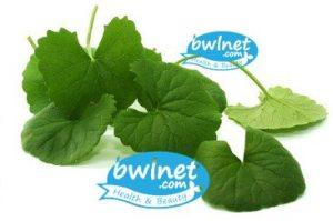 bwlnet-centella-asiatica-leaf