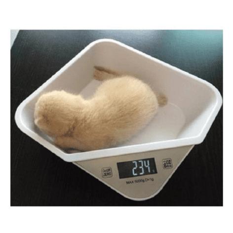 bilancia cuccioli