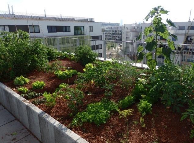 7 hlavních důvodů pro zastřešení vaší zahrady