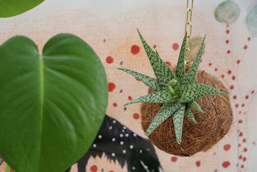 planteplaneter kokedama event
