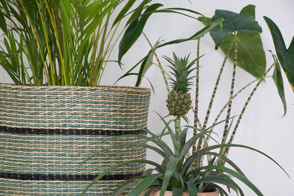 Indretning: Eksotiske fornemmelser og grønne planter