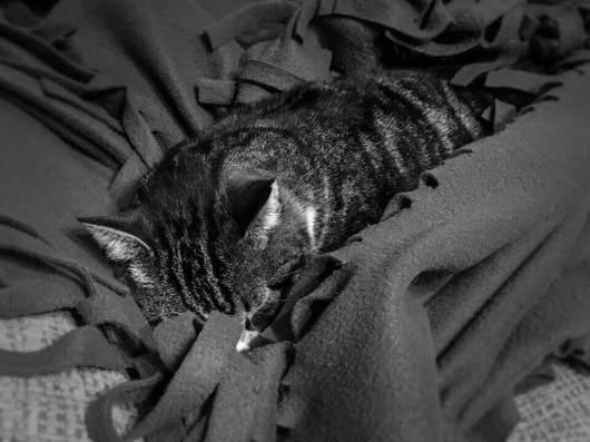 Vierbeiniger-Begleiter-Minou_08-schlafen01 Unsere vierbeinigen Begleiter – Teil 1: Minou