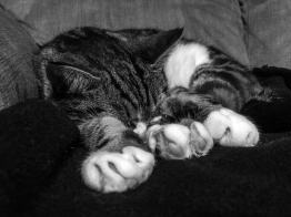 Vierbeiniger-Begleiter-Minou_08-schlafen05 Unsere vierbeinigen Begleiter – Teil 1: Minou