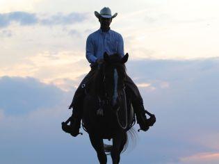 Major Westernpferd