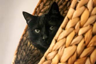 Mitbewohner auf vier Pfoten – Katzenkorb