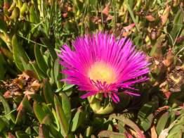 Die Mutter kommt – Conil Blume