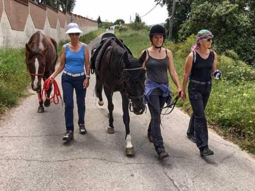 Die Mutter kommt – Pferde spazieren